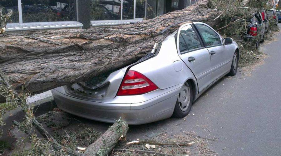 фото упавшего на машину дерева