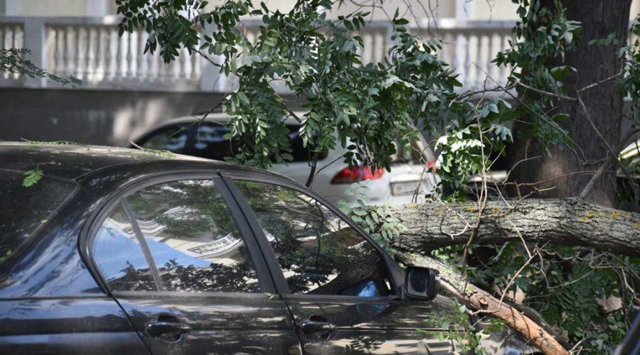 фото ветки на автомобиле